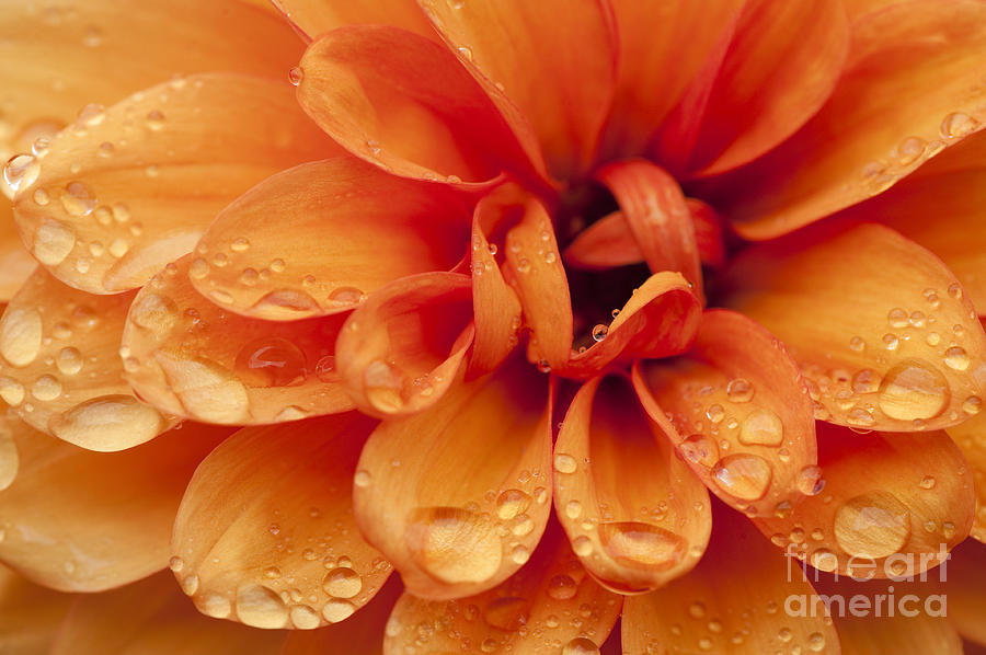 Abstract Photograph - After The Rain by Anne Gilbert