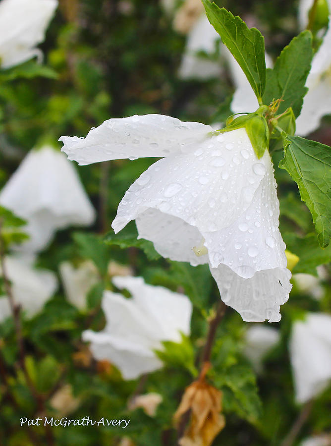 Flowers Photograph - After The Rain by Pat McGrath Avery