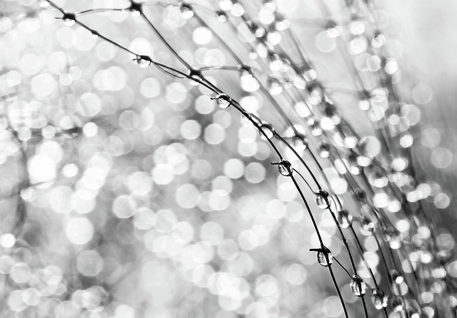 Macro Photograph - After The Rain by Theresa Tahara