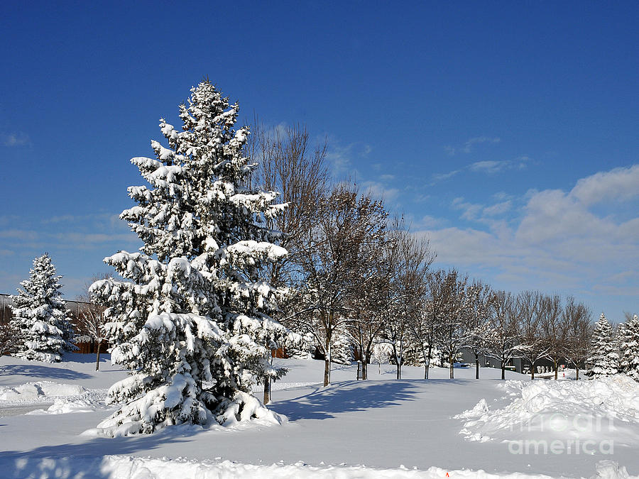 Snow Photograph - After The Snow 2 by Graham Taylor