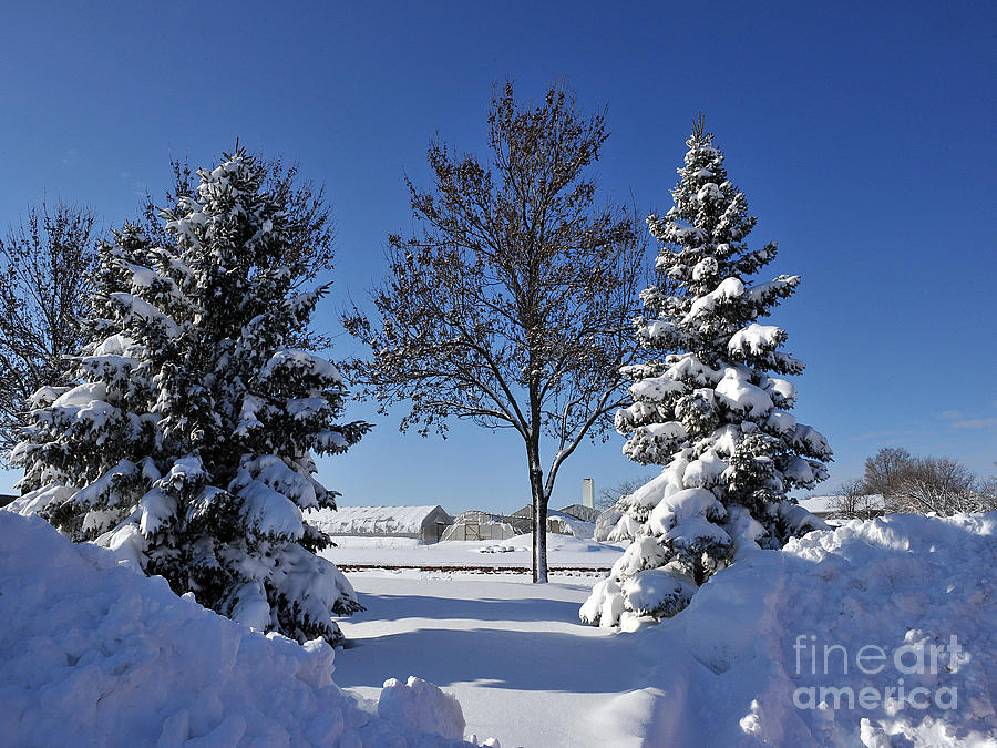 Snow Photograph - After The Snow by Graham Taylor