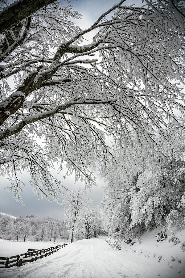 Tree Photograph - After The Snow Storm by John Haldane