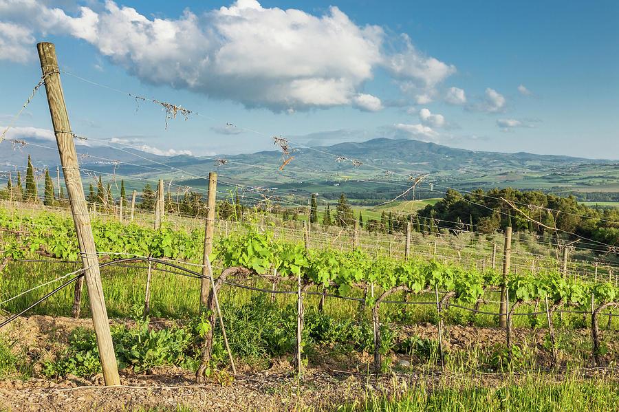 Afternoon At Tuscany Vineyards Photograph by Saro17