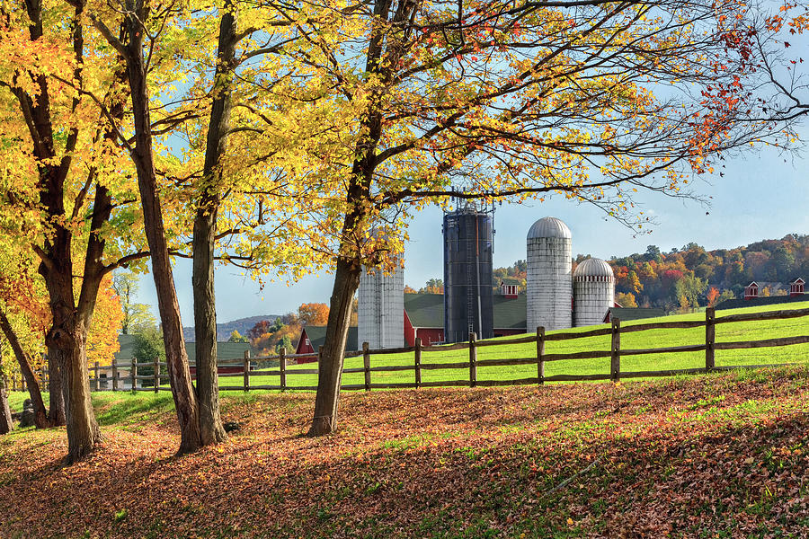 Bucolic Photograph - Afternoon Delight by Bill Wakeley