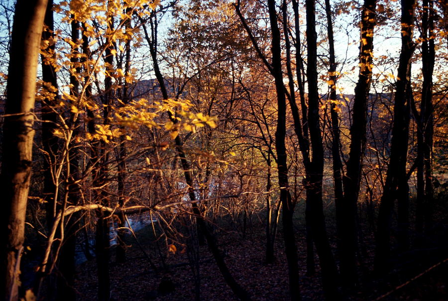 Fall Photograph - Afternoon Foliage by Brian Lucia