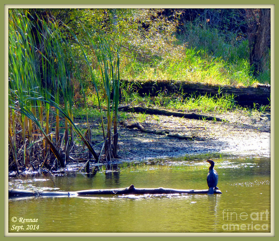 Bird Photograph - Afternoon View by Rennae Christman