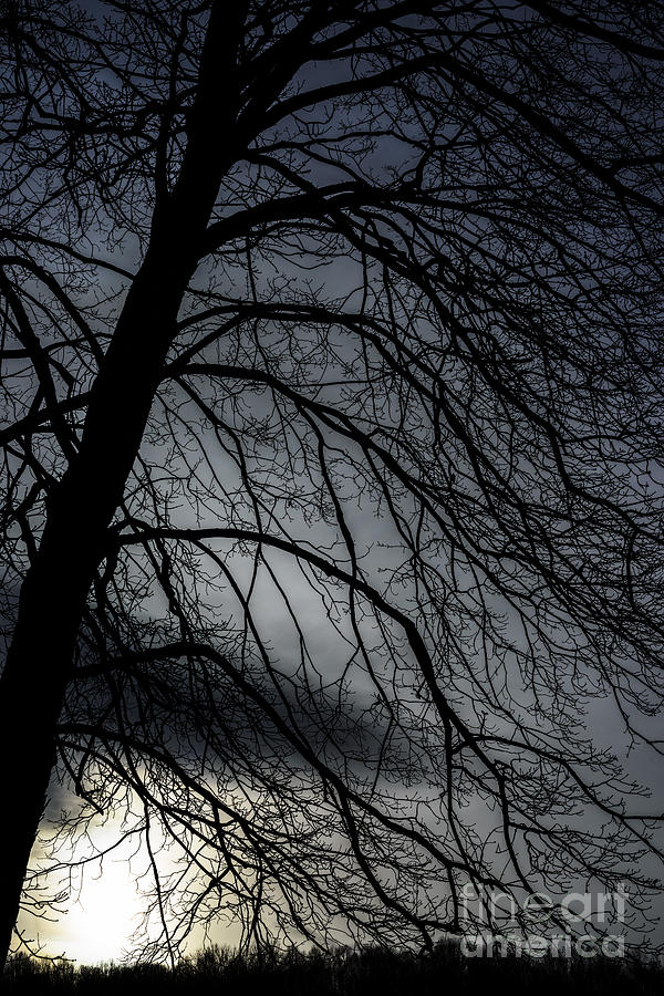 Maple Tree Photograph - Against A Winter Sky by Thomas R Fletcher