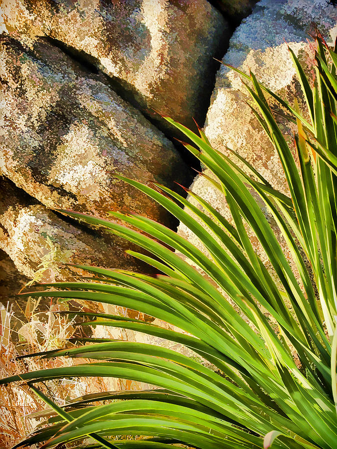 Cactus Photograph - Against The Rocks by Scott Campbell