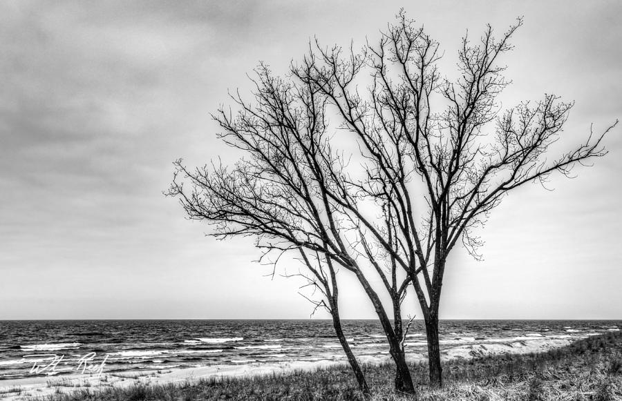 Tree Photograph - Against The Wind by William Reek