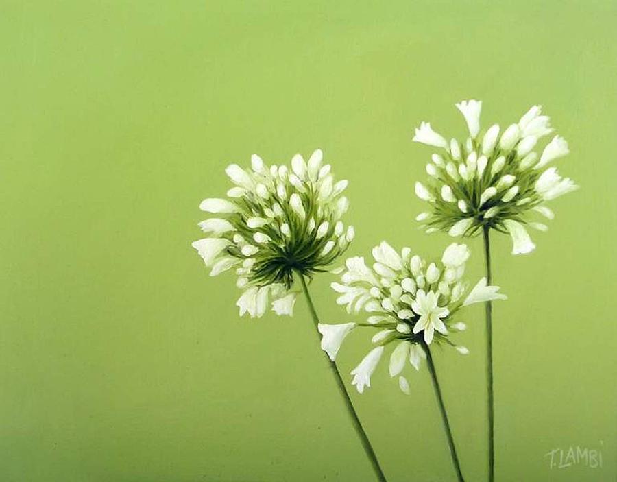 Flower Painting - Agapanthus by Trisha Lambi