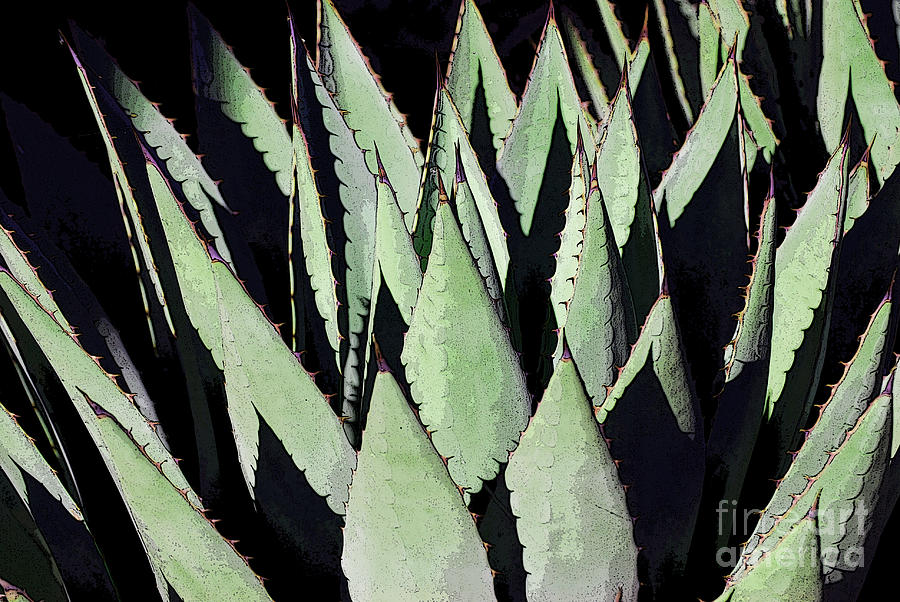 Agave Green Grey by Victoria Page
