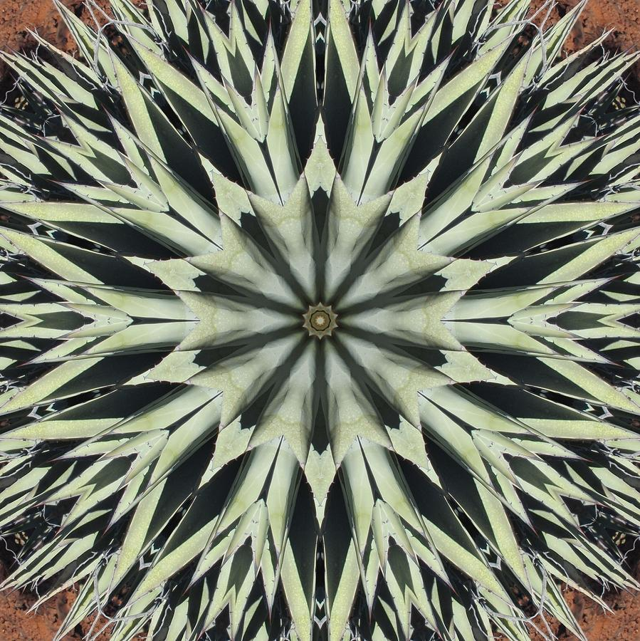 Agave Star by Trina Stephenson