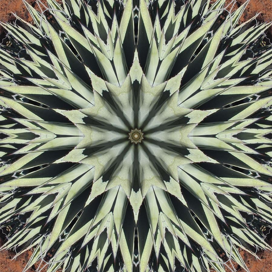 Agave Star by Trina Stephenson