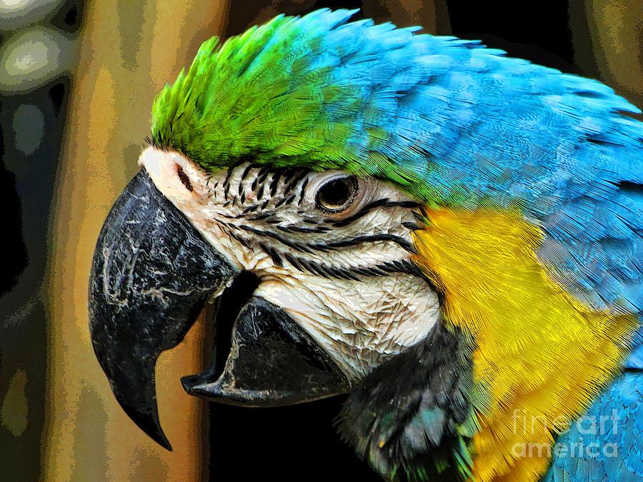 Bird Photograph - Age And Beauty by Ben Yassa