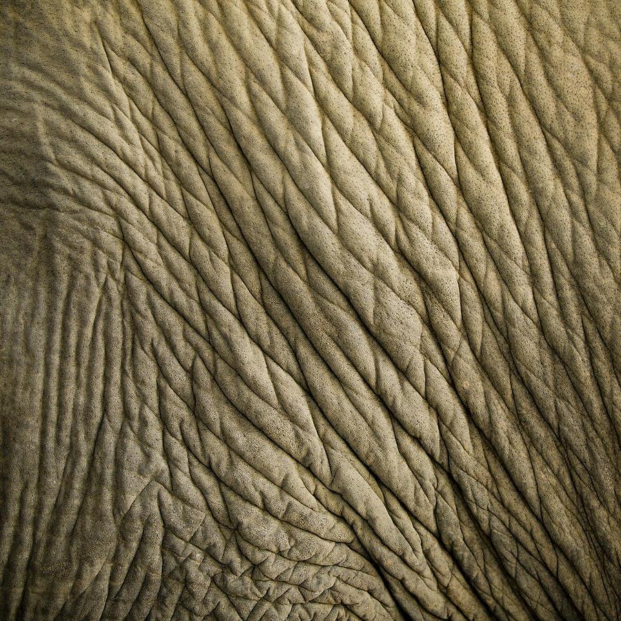 Elephant Photograph - Age Beautiful by Steve Smith