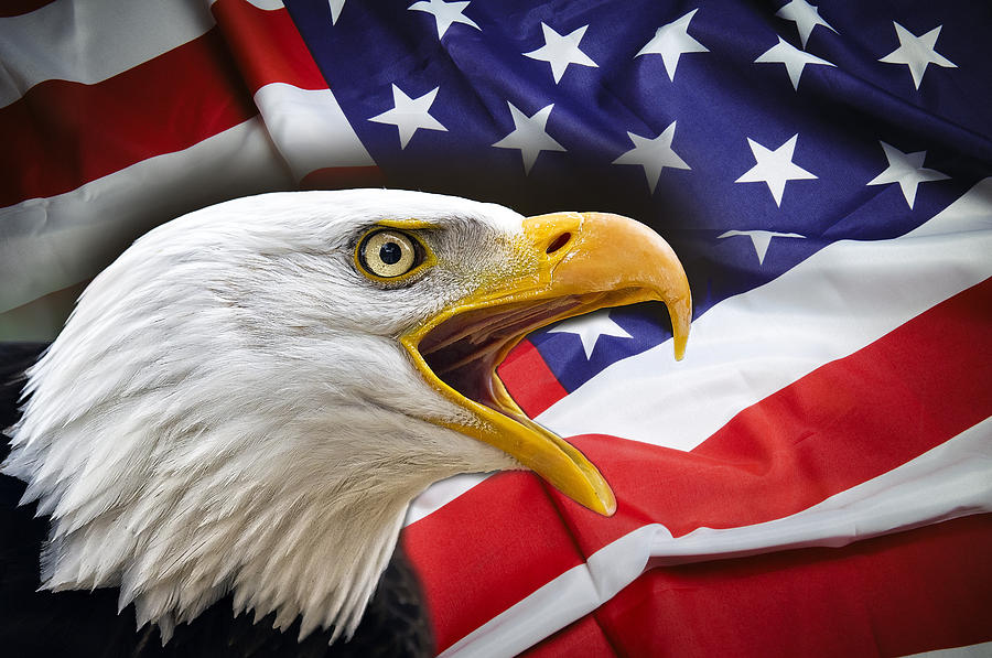 America Digital Art - Aggressive Eagle And United States Flag by Daniel Hagerman