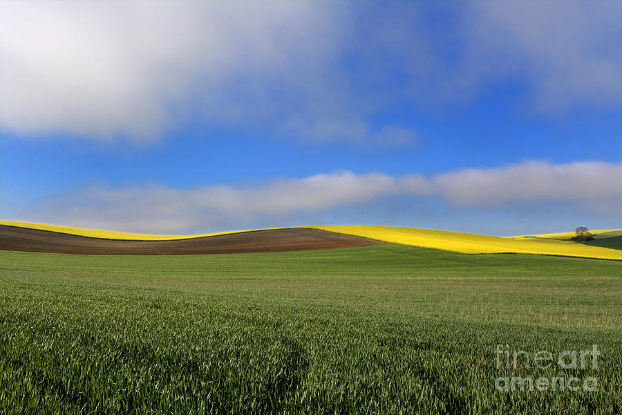 Growth Photograph - Agricultural Landscape. Auvergne. France. by Bernard Jaubert