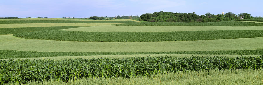 Crop Photograph - Agriculture - Contour Strips Of Mid by Timothy Hearsum
