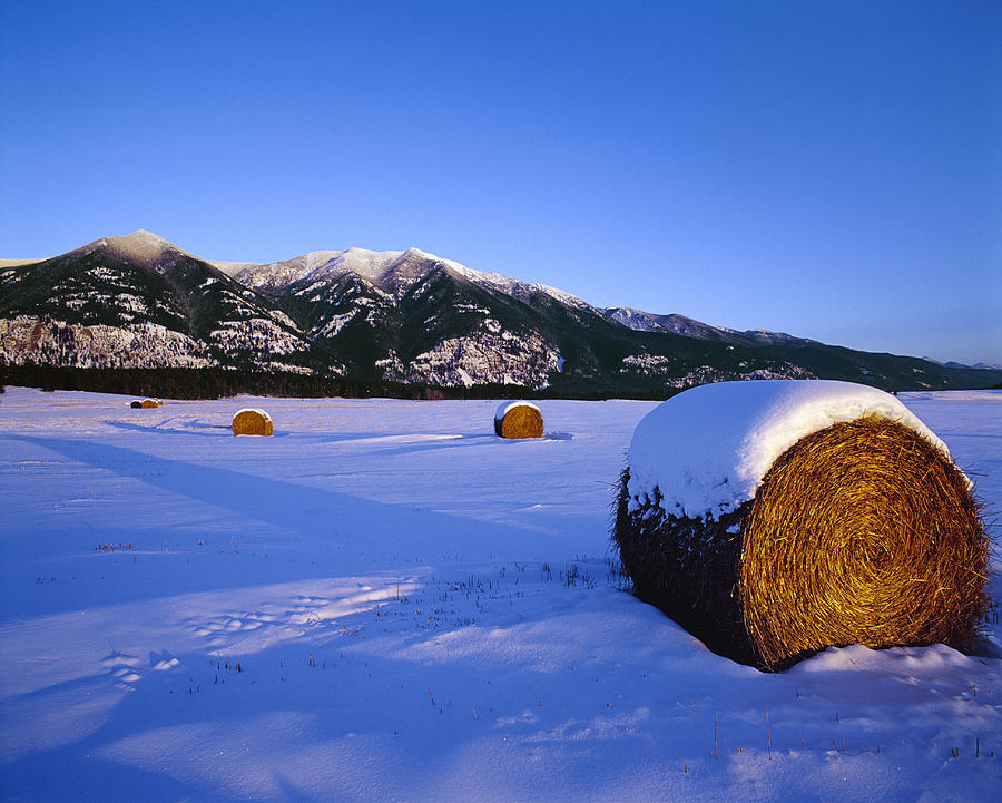 Agriculture Round Hay Rolls In A Snow By Chuck Haney