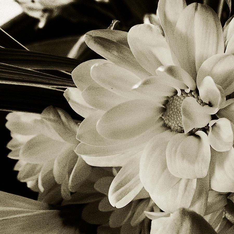 Flower Photograph - Ahhhhhhhhh by Tanya Jacobson-Smith