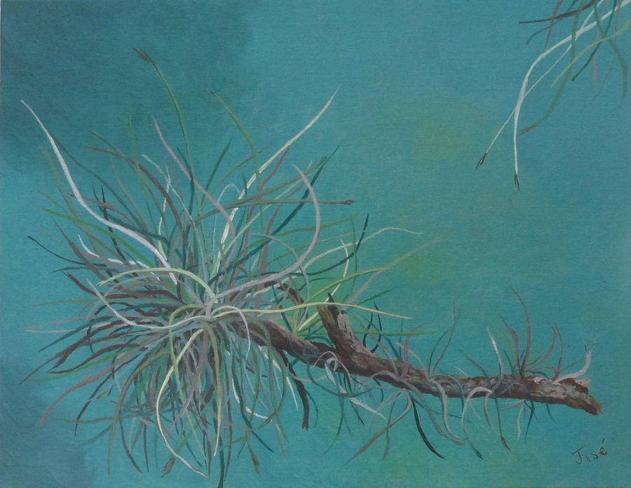 Air Plant Painting - Air Plant Study by Hilda and Jose Garrancho