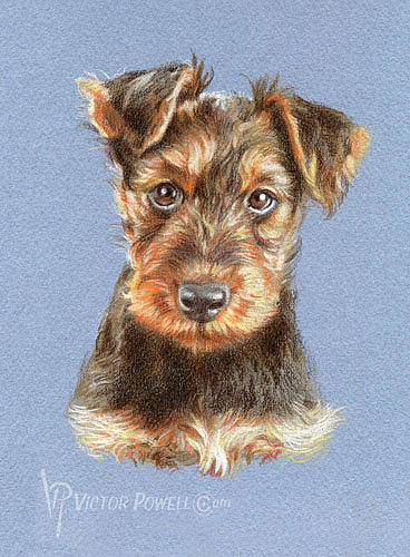 Airedale Terrier Mixed Media - Airedale Terrier Puppy Portrait by Victor Powell