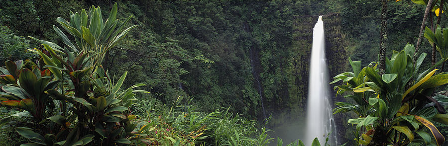Color Image Photograph - Akaka Falls State Park, Hawaii, Usa by Panoramic Images