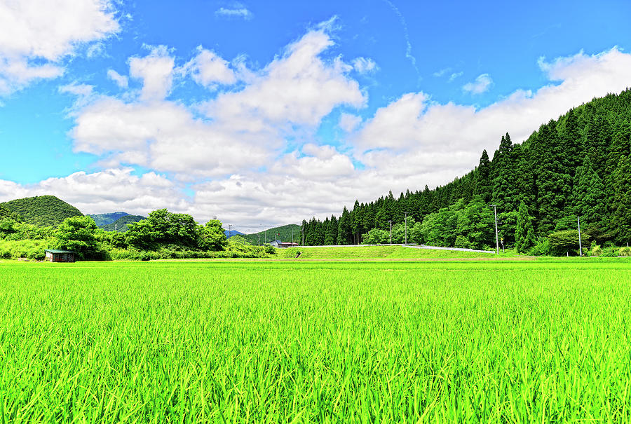 Akita Rice. Japan Photograph by Photo By Glenn Waters In Japan