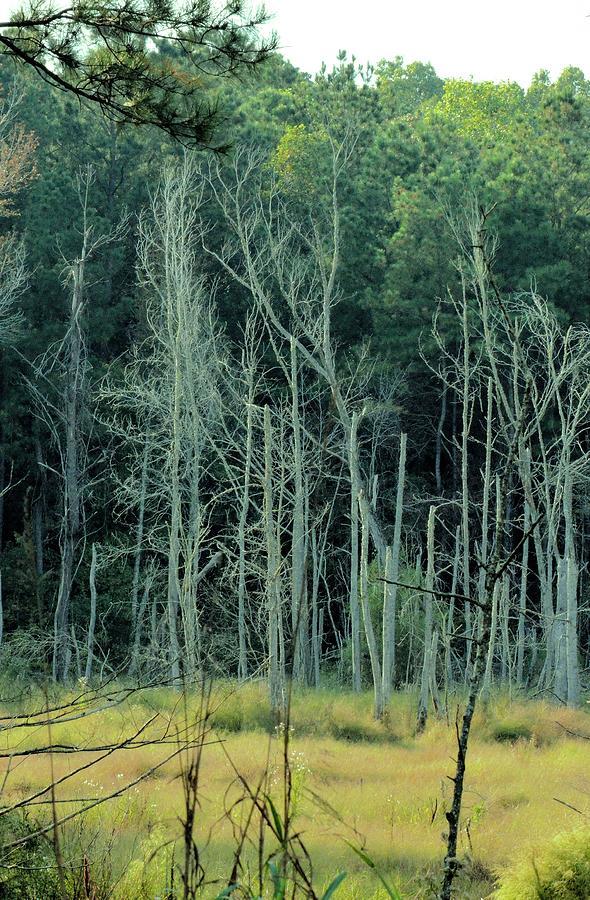 Alabama Photograph - Alabama Autumn Marsh by Maria Urso