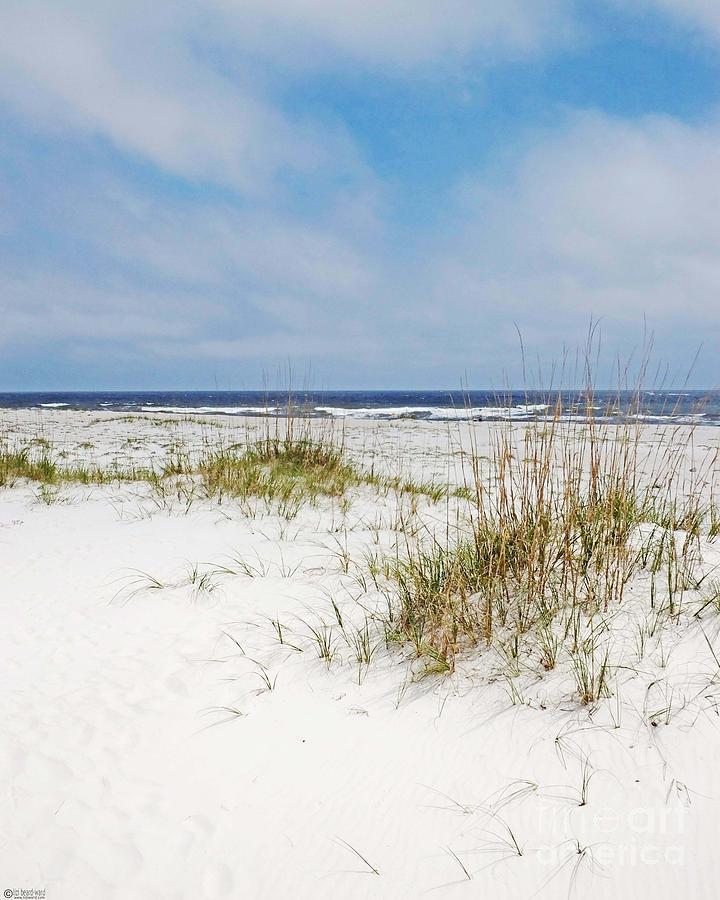 Beach Photograph - Alabama Point 2 by Lizi Beard-Ward