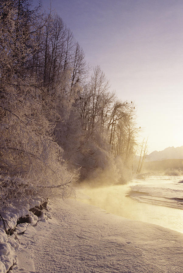 Frost Photograph - Alaska, Haines Bald Eagle Preserve by John Hyde