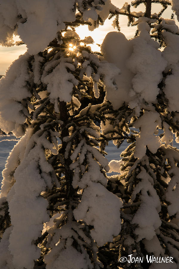 Alaska Photograph - Alaska Sun Burst by Joan Wallner