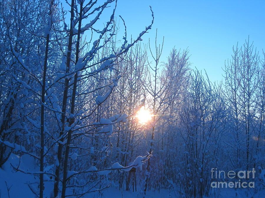 Alaska Photograph - Alaska Sunrise Shining Through Birches And Willows by Elizabeth Stedman