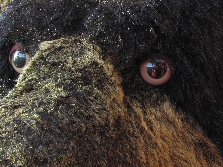 Alaskan Bear Photograph