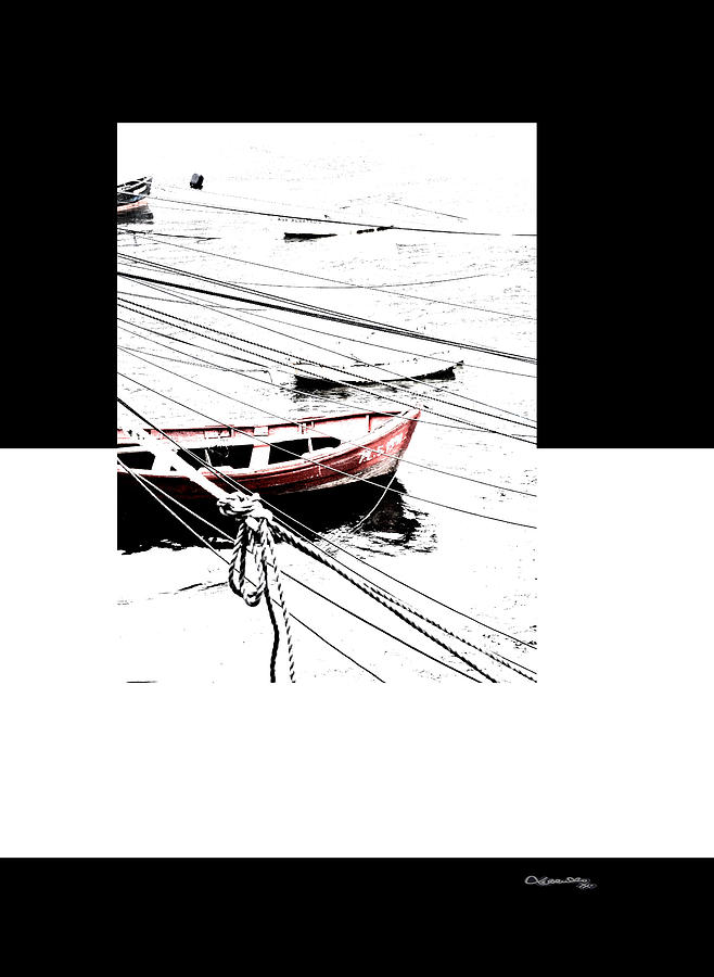 Galicia Digital Art - Albatros by Xoanxo Cespon