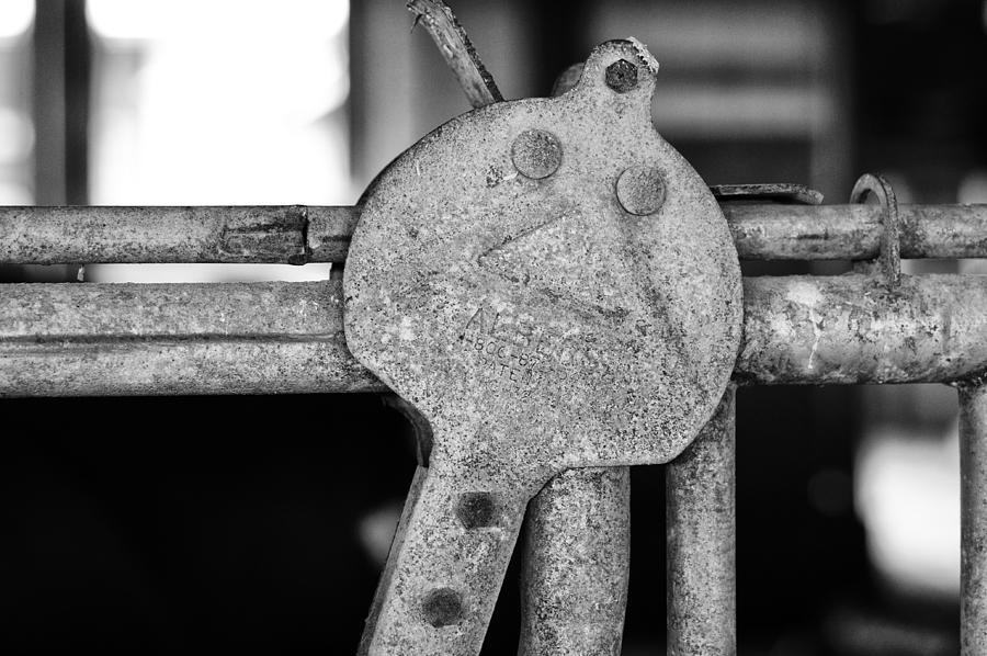 Albers Photograph - Albers by Christi Kraft