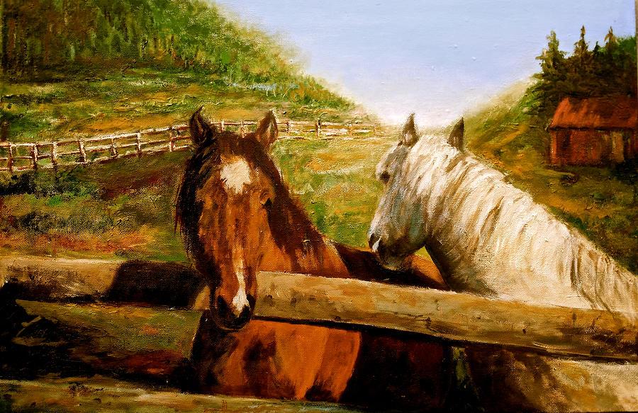 Alberta Horse Farm by Sher Nasser
