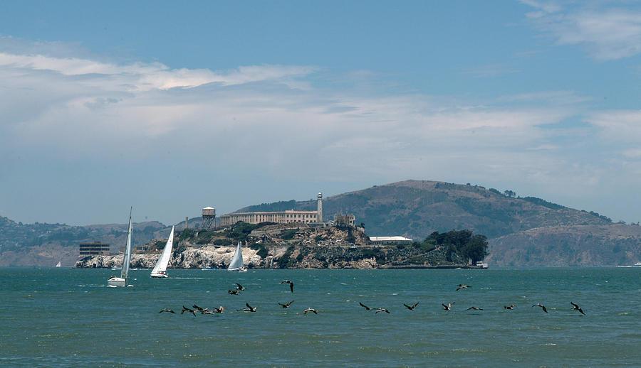 Alcatraz Island Photograph - Alcatraz With Pelicans by Wesley Elsberry