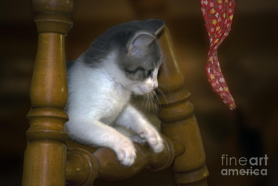 Animals Photograph - Alert Kitty by Thomas Woolworth