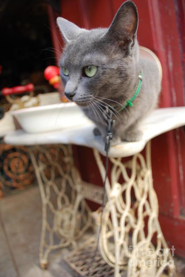 Cat Photograph - Alert by Susan Hernandez