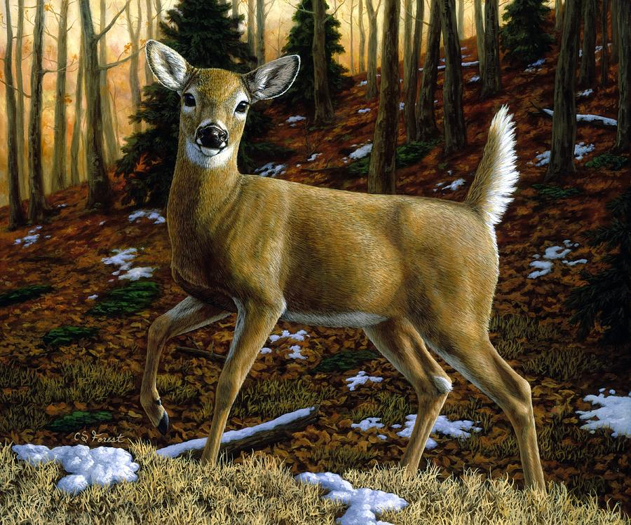 Deer Painting - Whitetail Deer - Alerted by Crista Forest