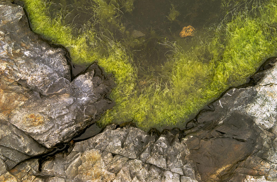 Algae Photograph - Algae Pool Abstract Photo by Peter J Sucy