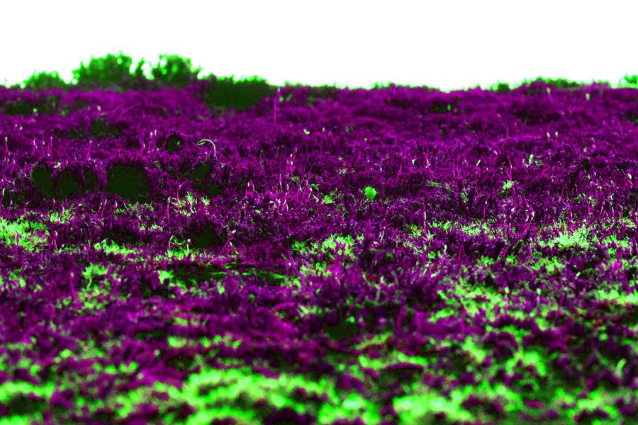 Alien Marsh Photograph