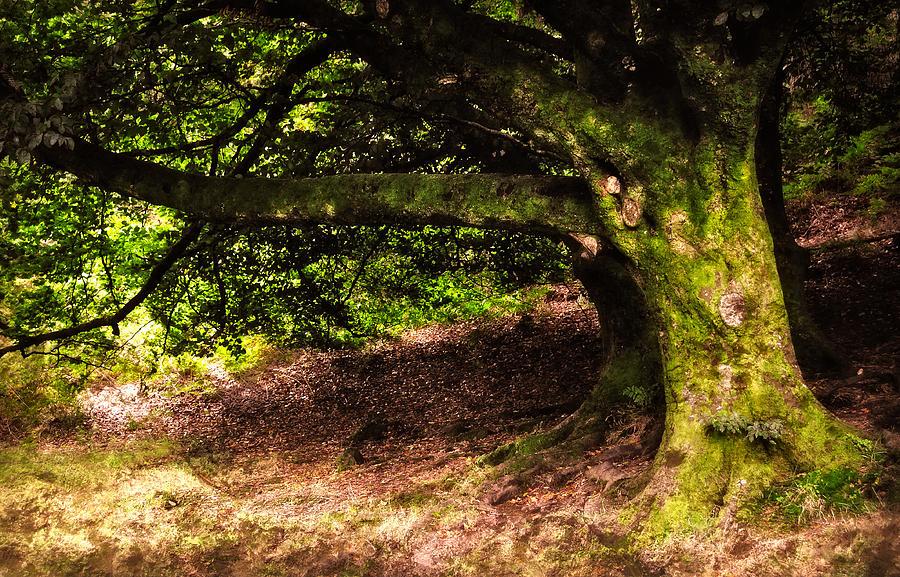 Ireland Photograph - Alive Memory Of Thetrees. Glendalough. Ireland by Jenny Rainbow