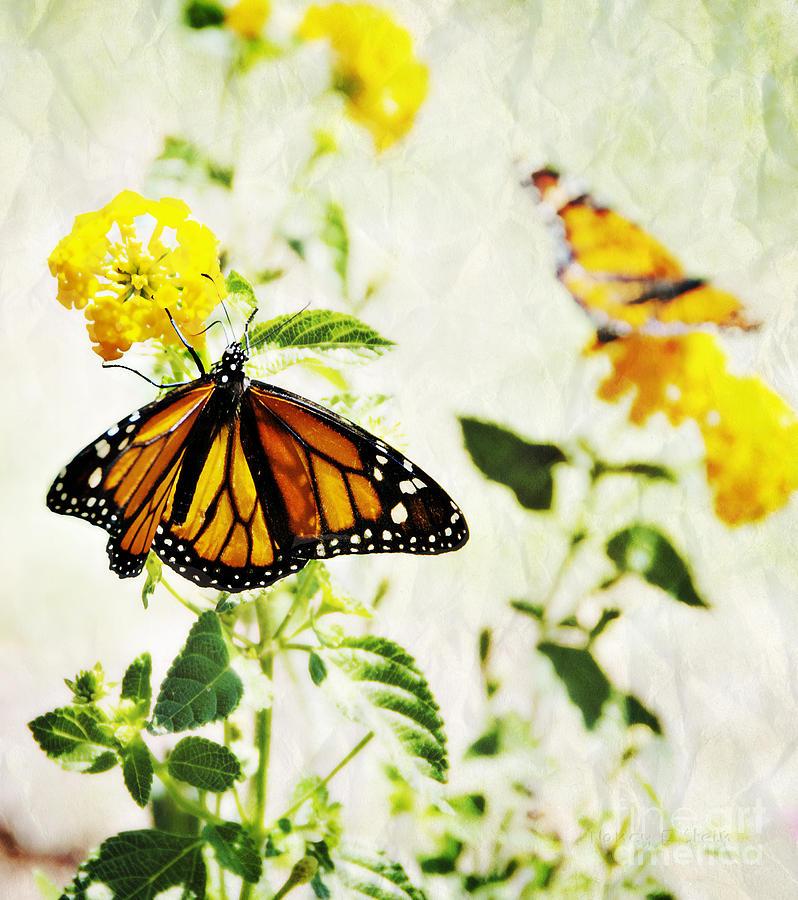 All A Flutter Monarch Photograph