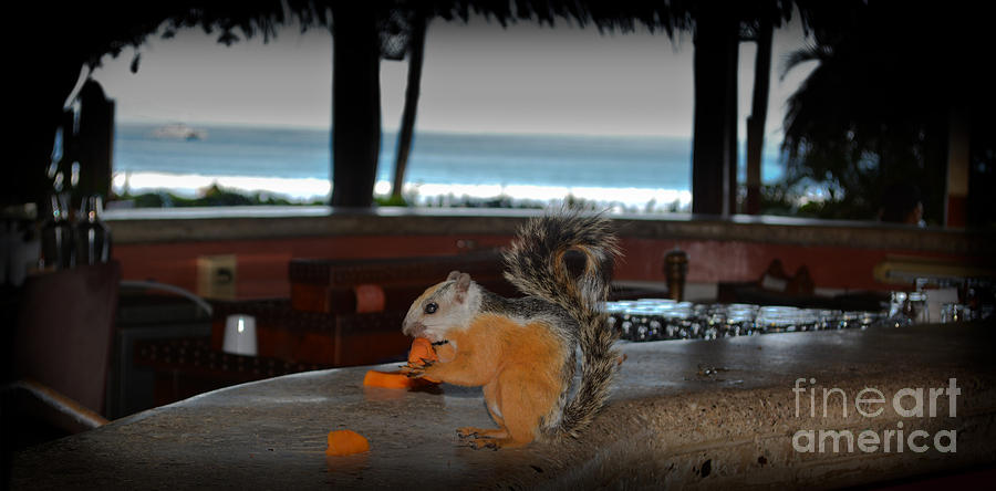 Squirrel Photograph - All Inclusive Squirrel by Gary Keesler