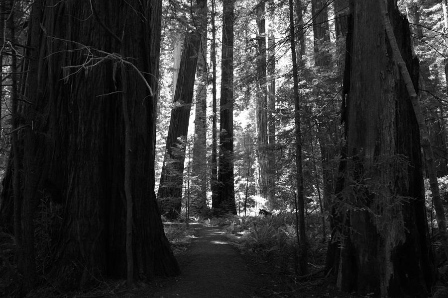 Humboldt Redwoods State Park Photograph - All Is Quiet by Laurie Search