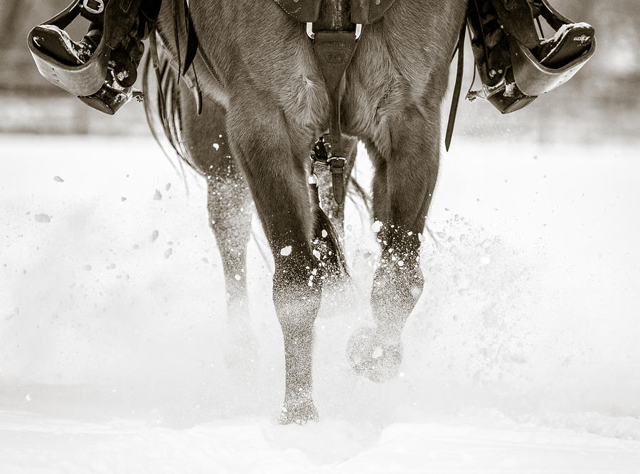 Western Horse Photograph - All Legs by Gigi Embrechts