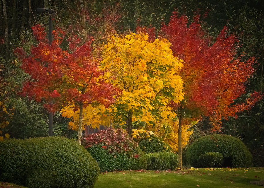 Autumn Photograph - All Lit Up by Ronda Broatch