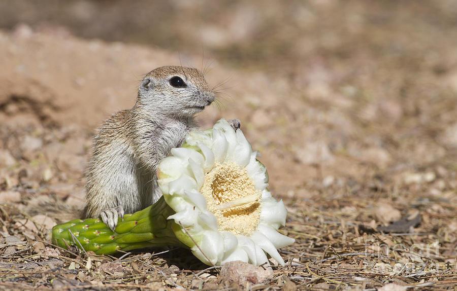 Squirrel Photograph - All Mine by Bryan Keil